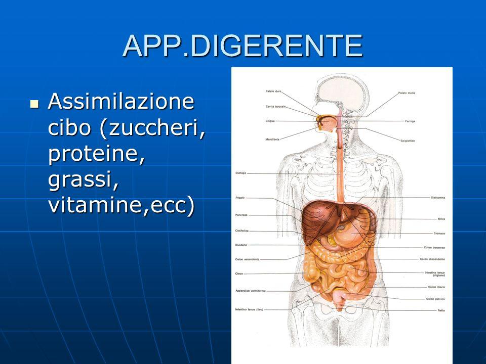 APP.DIGERENTE Assimilazione cibo (zuccheri, proteine, grassi, vitamine,ecc)