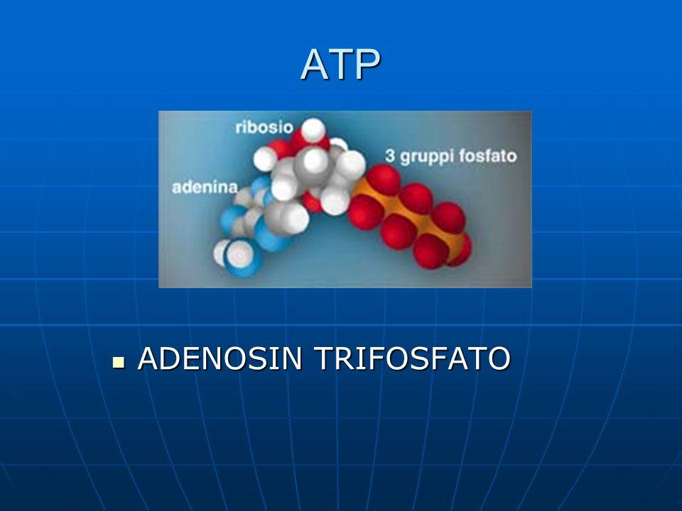ATP ADENOSIN TRIFOSFATO