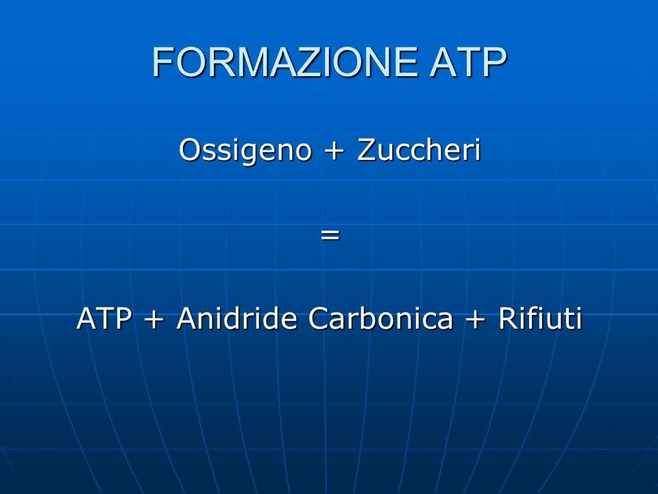 ATP + Anidride Carbonica + Rifiuti