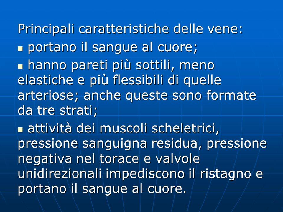 Principali caratteristiche delle vene: