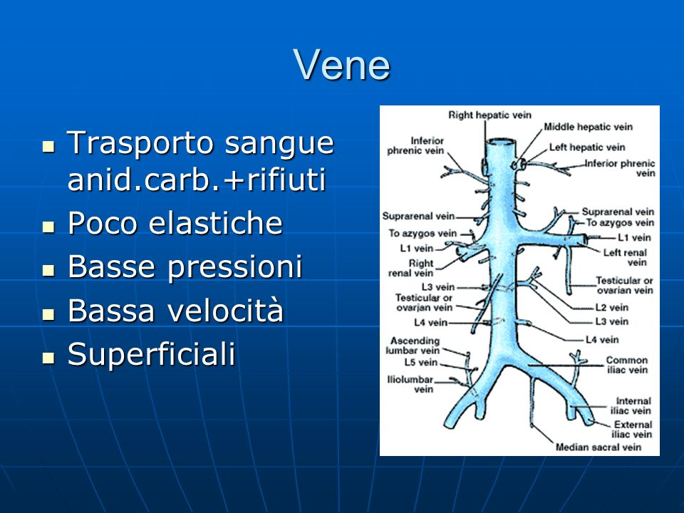 Vene Trasporto sangue anid.carb.+rifiuti Poco elastiche