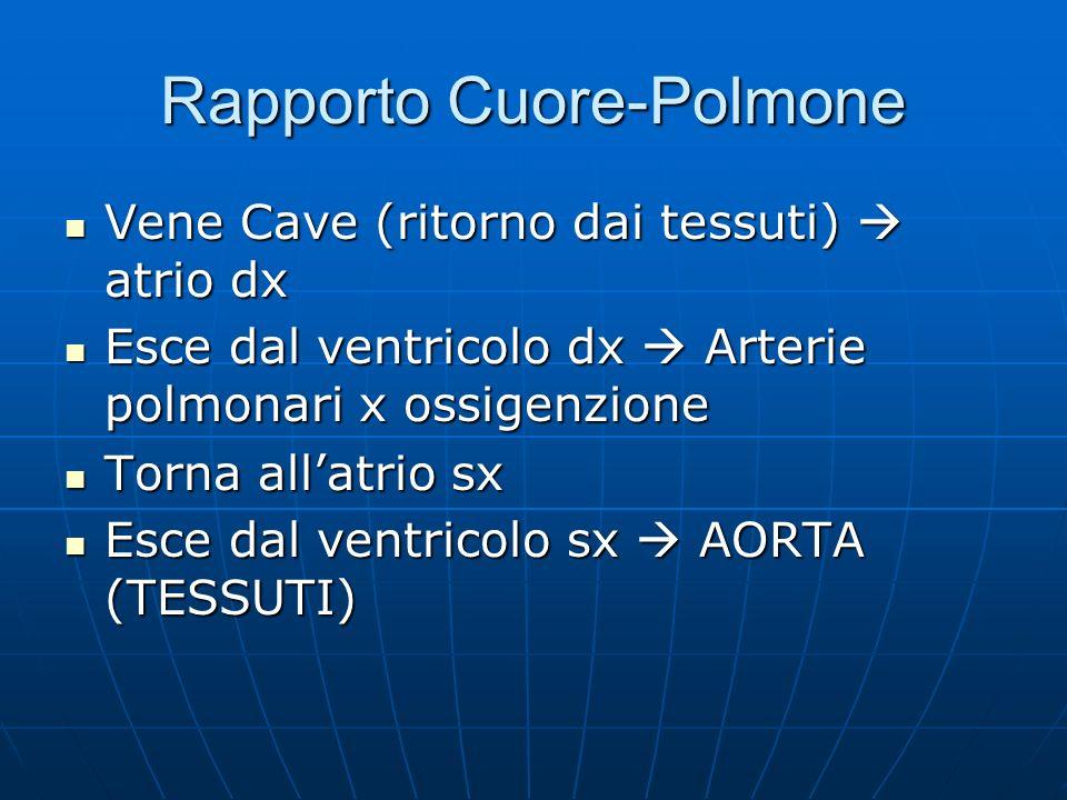 Rapporto Cuore-Polmone