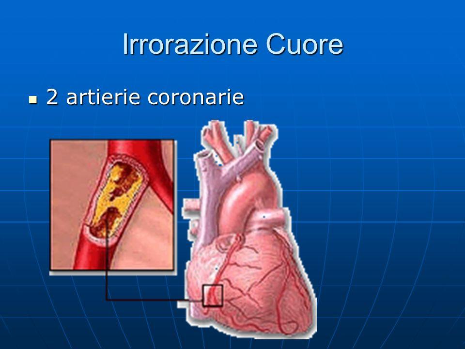 Irrorazione Cuore 2 artierie coronarie