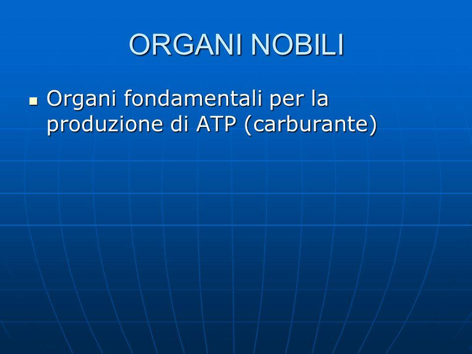 ORGANI NOBILI Organi fondamentali per la produzione di ATP (carburante)