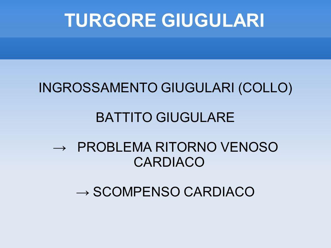 TURGORE GIUGULARI INGROSSAMENTO GIUGULARI (COLLO) BATTITO GIUGULARE