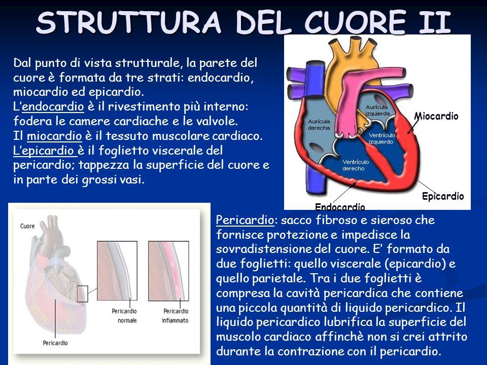 STRUTTURA DEL CUORE II Miocardio. Epicardio. Endocardio.