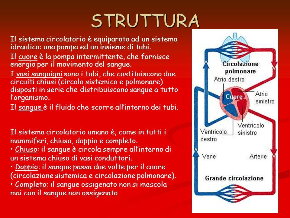 STRUTTURA Il sistema circolatorio è equiparato ad un sistema idraulico: una pompa ed un insieme di tubi.