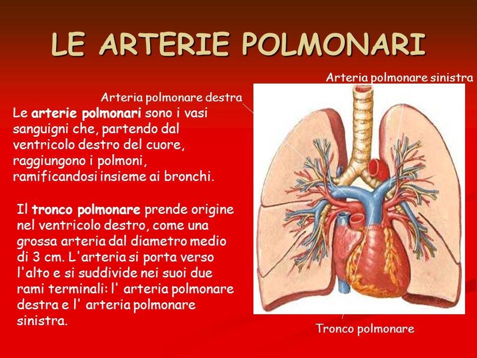 LE ARTERIE POLMONARI Arteria polmonare sinistra. Arteria polmonare destra.