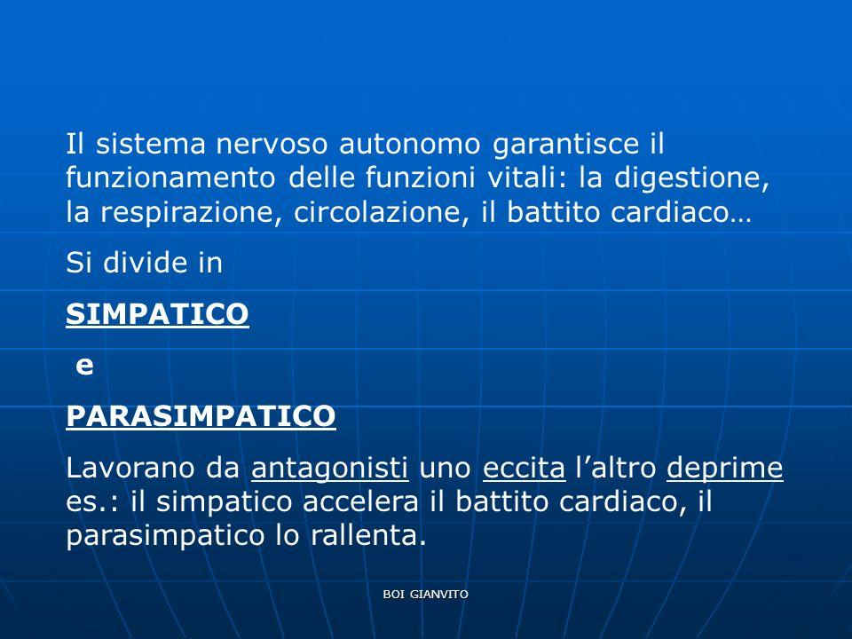 Il sistema nervoso autonomo garantisce il funzionamento delle funzioni vitali: la digestione, la respirazione, circolazione, il battito cardiaco…