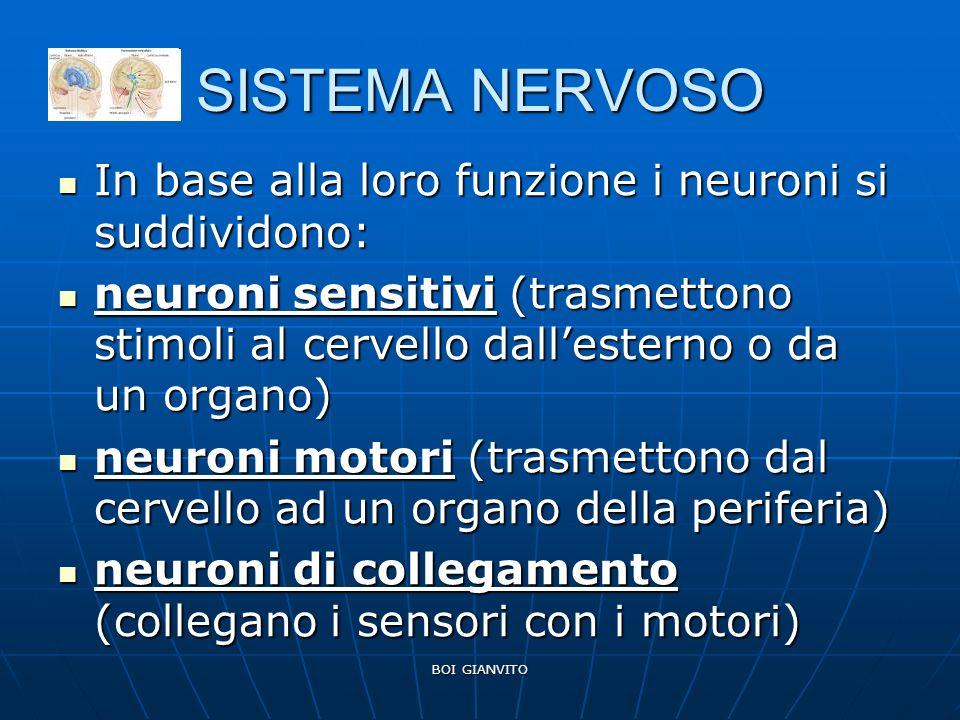 SISTEMA NERVOSO In base alla loro funzione i neuroni si suddividono: