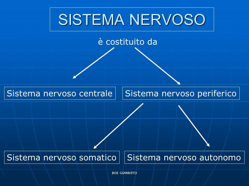 SISTEMA NERVOSO è costituito da Sistema nervoso centrale