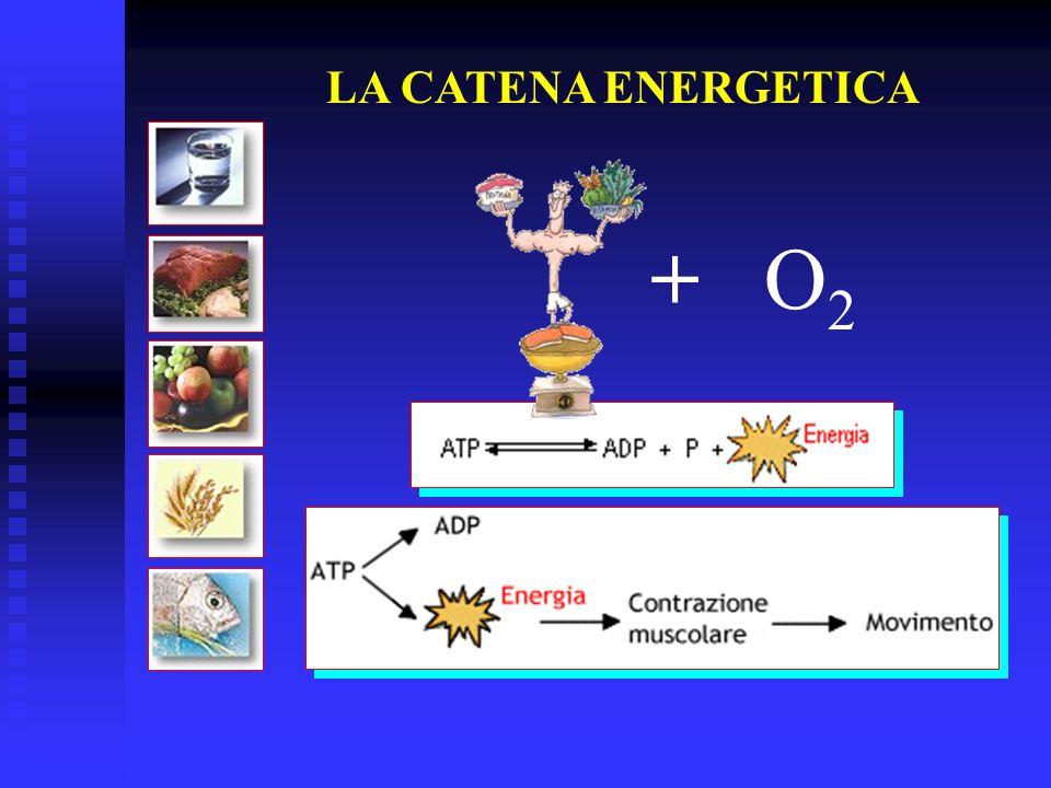 LA CATENA ENERGETICA + O2