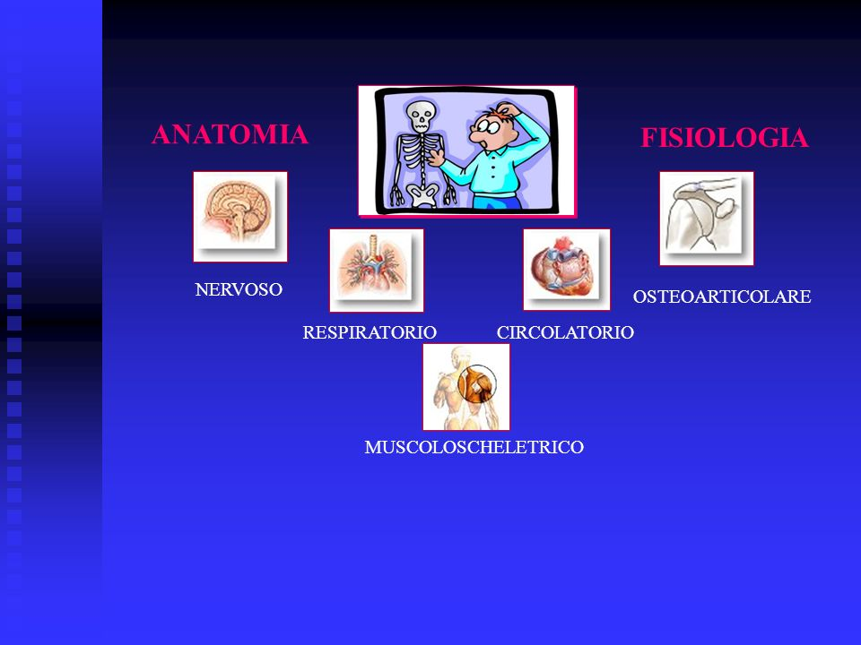 ANATOMIA FISIOLOGIA NERVOSO OSTEOARTICOLARE RESPIRATORIO CIRCOLATORIO