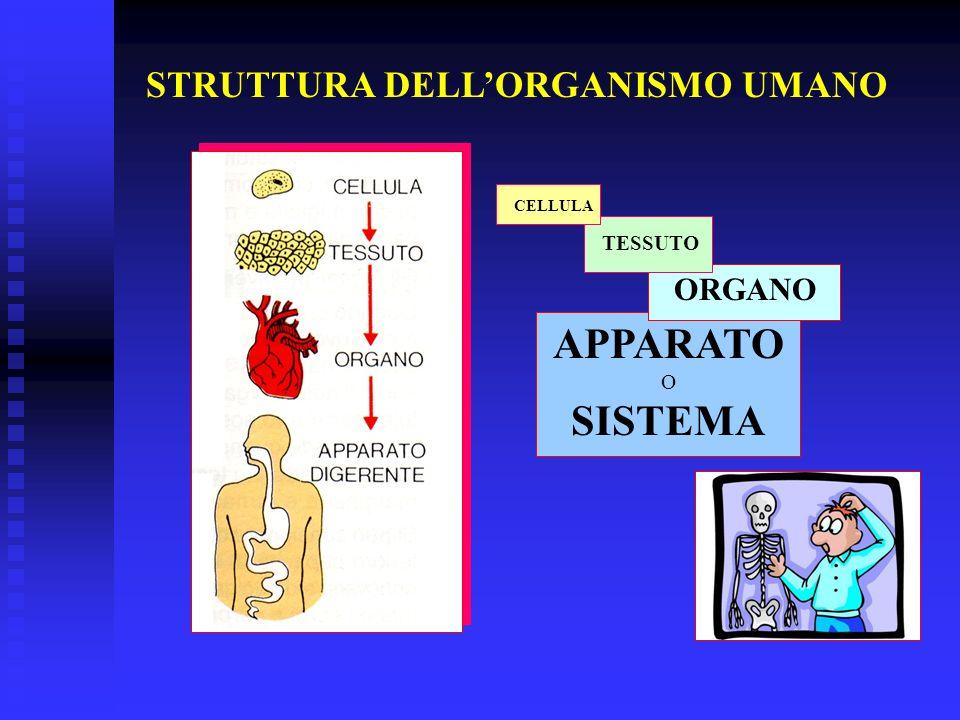 APPARATO SISTEMA STRUTTURA DELL'ORGANISMO UMANO ORGANO TESSUTO O