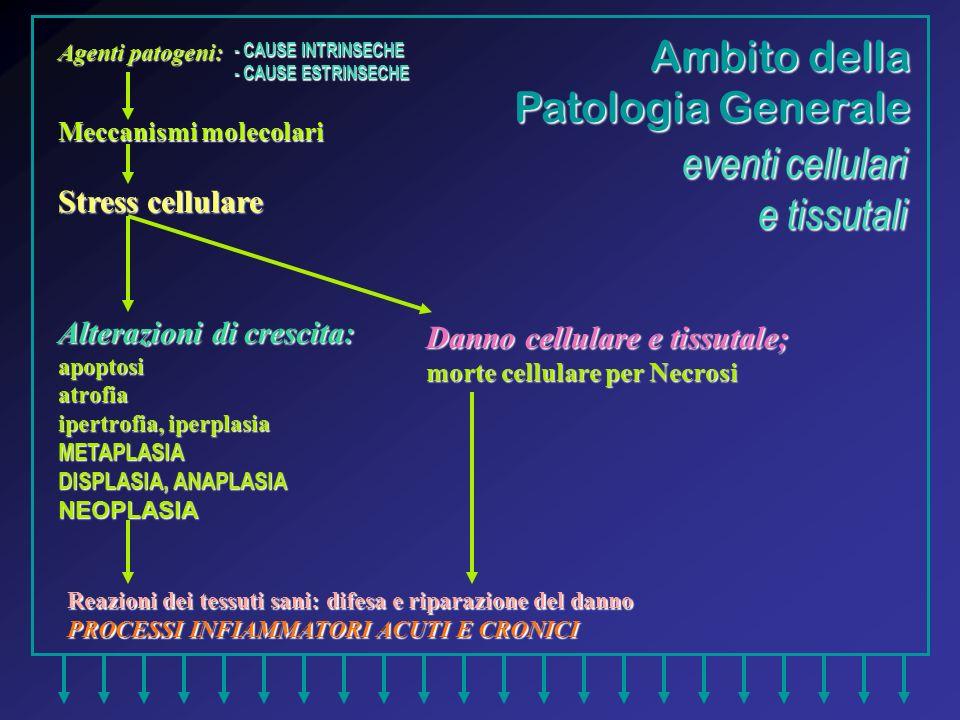 Ambito della Patologia Generale eventi cellulari e tissutali