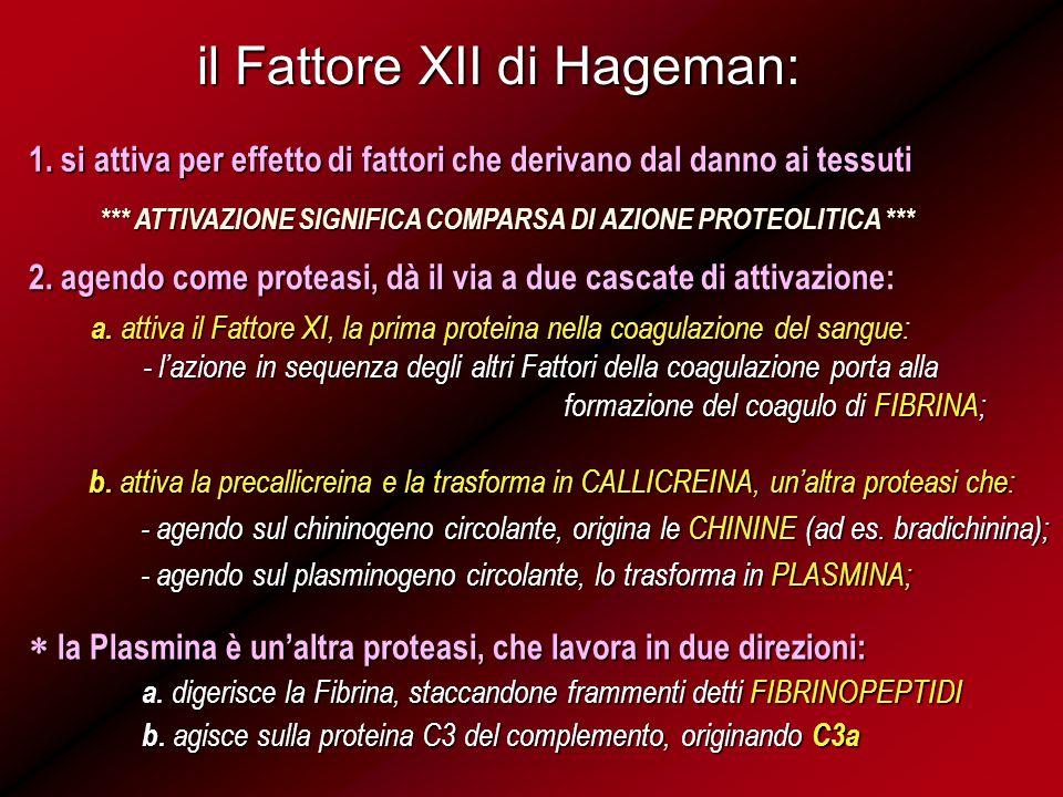 il Fattore XII di Hageman: