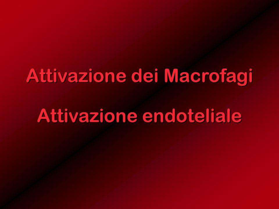 Attivazione dei Macrofagi Attivazione endoteliale