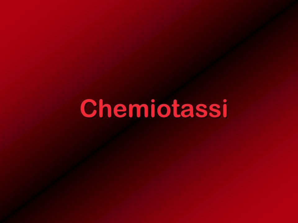 Chemiotassi