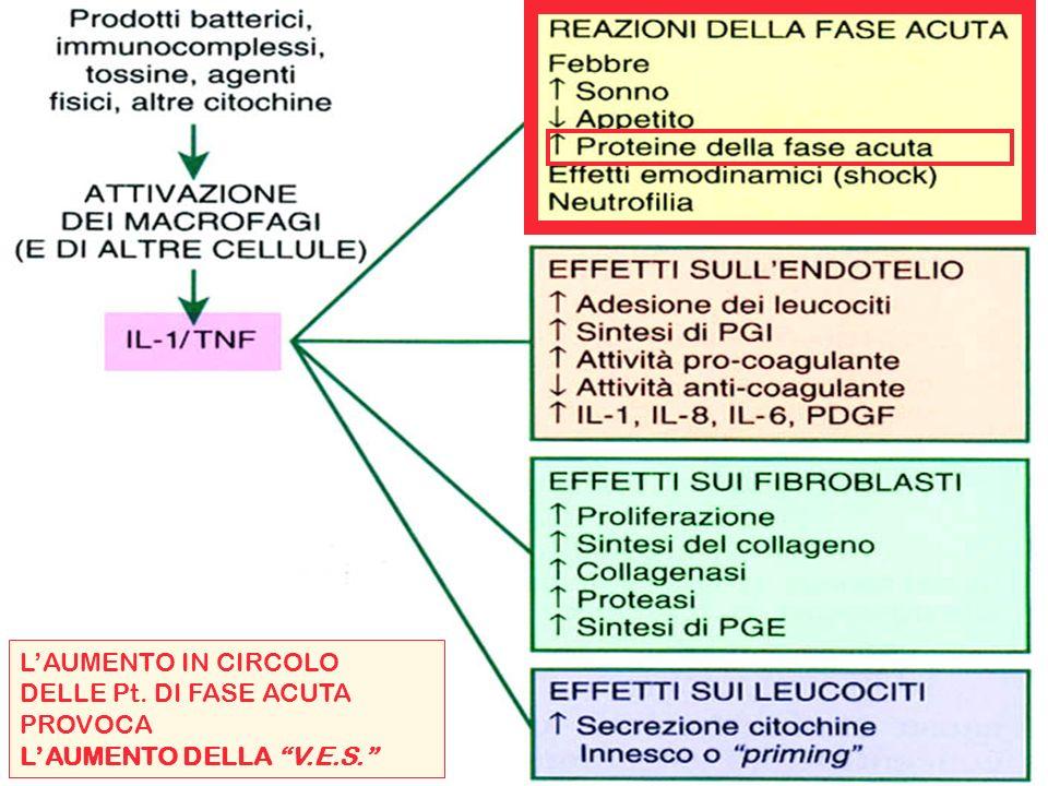 L'AUMENTO IN CIRCOLO DELLE Pt. DI FASE ACUTA PROVOCA L'AUMENTO DELLA V.E.S.