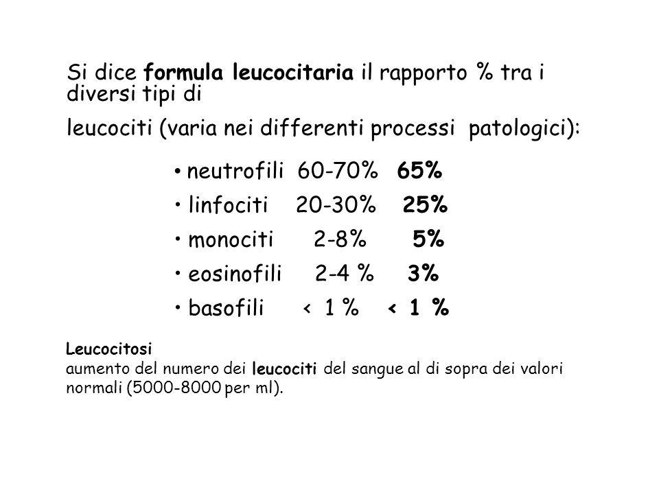 Si dice formula leucocitaria il rapporto % tra i diversi tipi di
