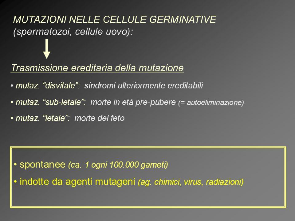 MUTAZIONI NELLE CELLULE GERMINATIVE (spermatozoi, cellule uovo):
