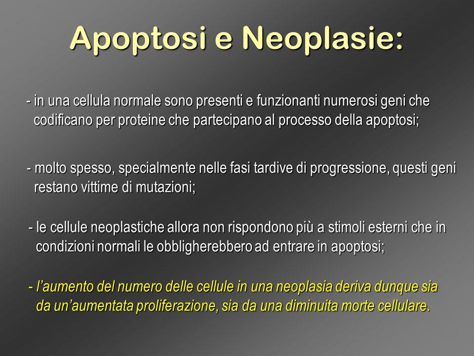 Apoptosi e Neoplasie: in una cellula normale sono presenti e funzionanti numerosi geni che.