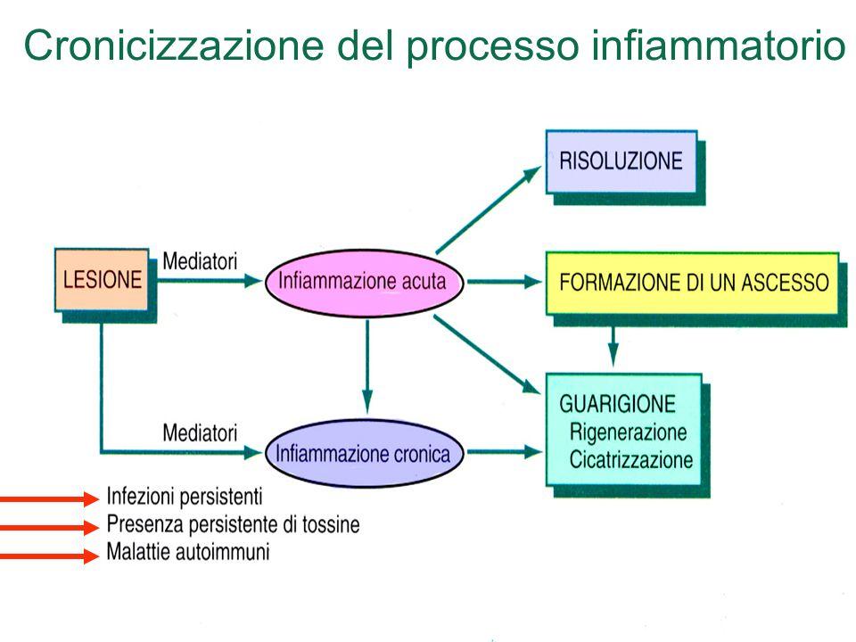 Cronicizzazione del processo infiammatorio