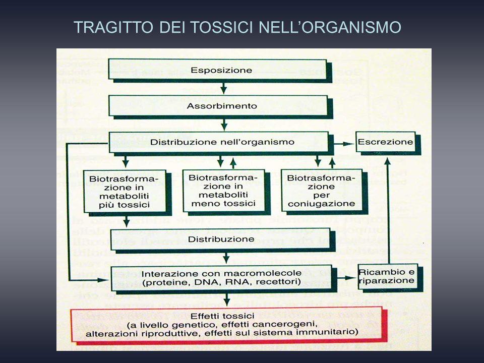 TRAGITTO DEI TOSSICI NELL'ORGANISMO