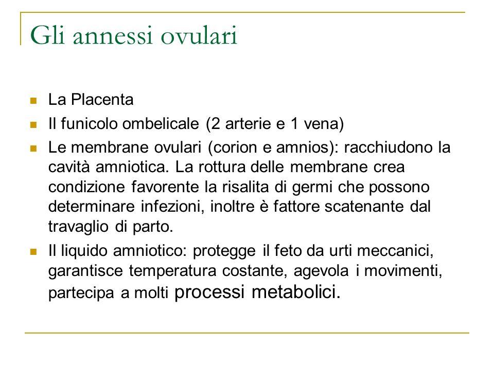 Gli annessi ovulari La Placenta