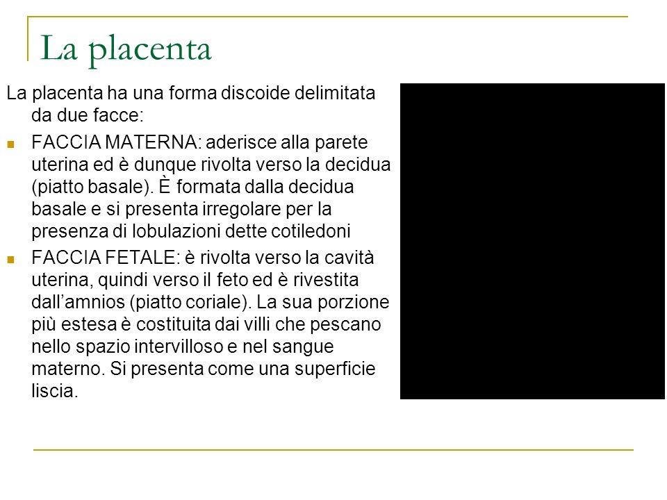 La placenta La placenta ha una forma discoide delimitata da due facce: