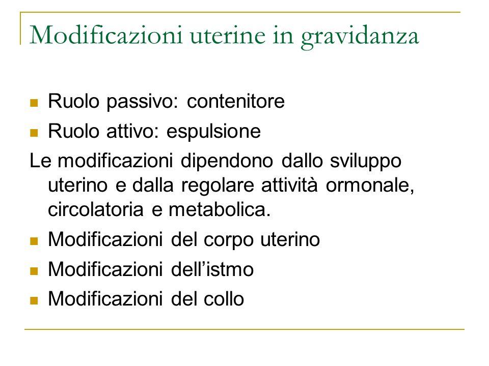 Modificazioni uterine in gravidanza