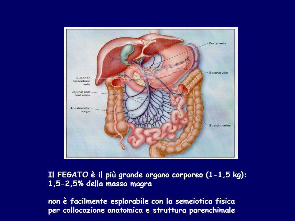 Il FEGATO è il più grande organo corporeo (1-1,5 kg):