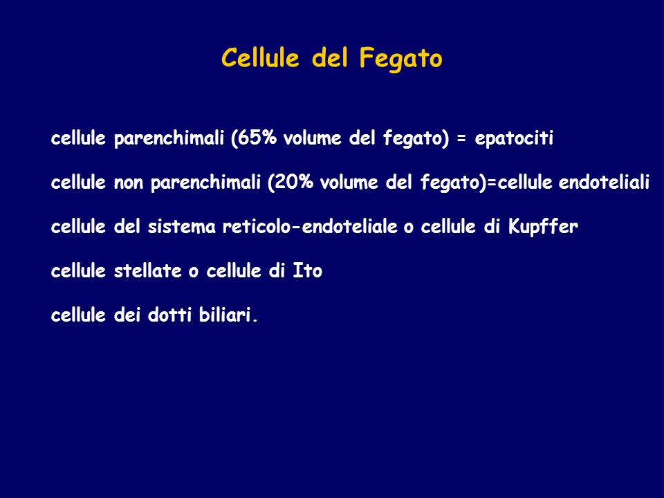 Cellule del Fegato cellule parenchimali (65% volume del fegato) = epatociti. cellule non parenchimali (20% volume del fegato)=cellule endoteliali.