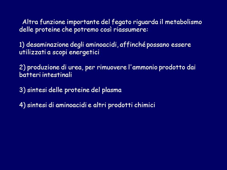 3) sintesi delle proteine del plasma