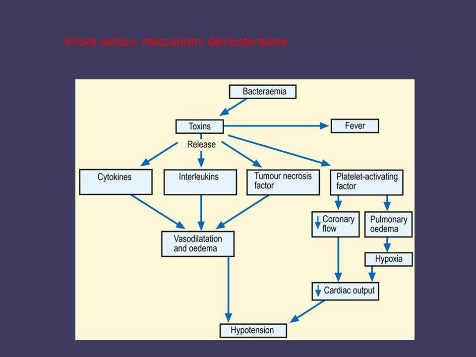 Shock settico: meccanismi dell'ipotensione
