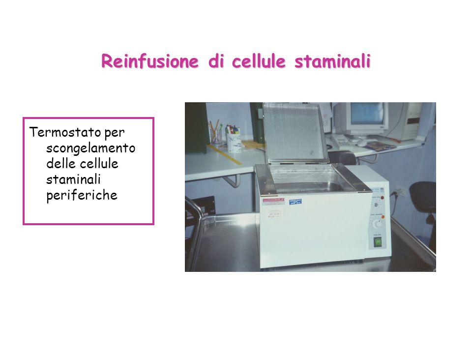 Reinfusione di cellule staminali