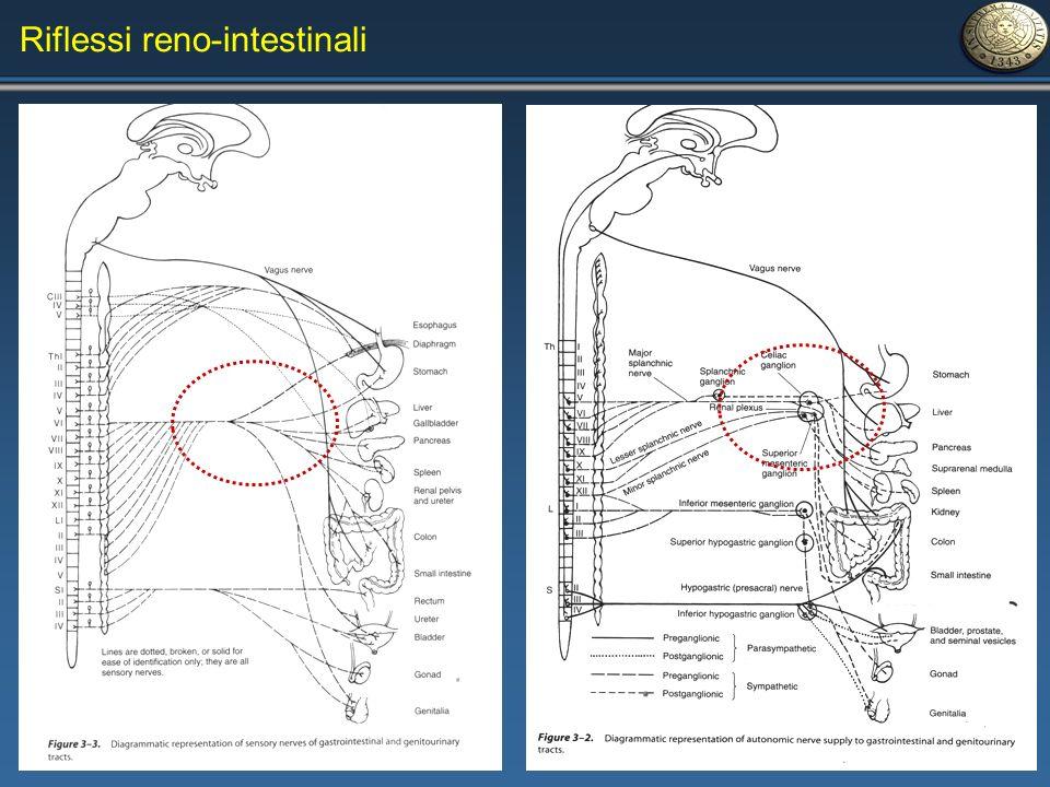 Riflessi reno-intestinali