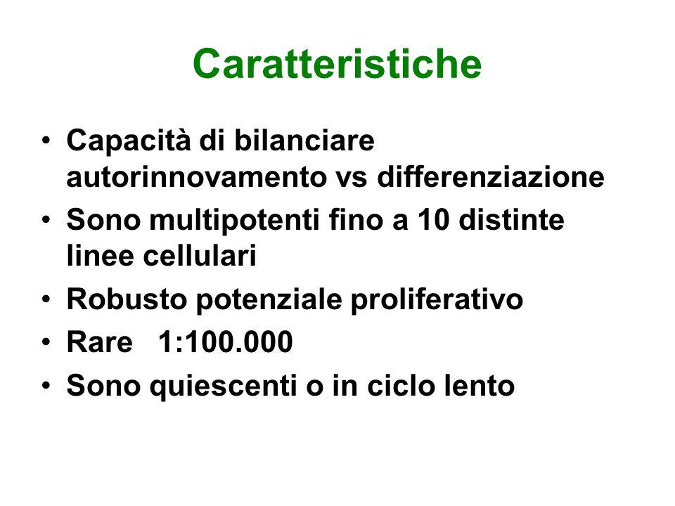 Caratteristiche Capacità di bilanciare autorinnovamento vs differenziazione. Sono multipotenti fino a 10 distinte linee cellulari.