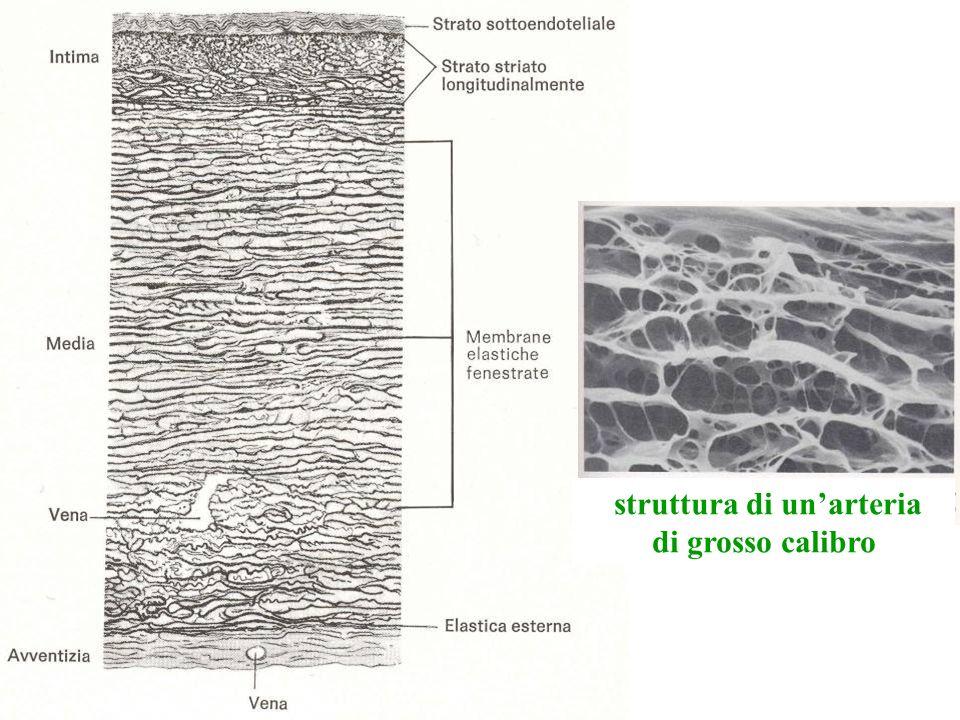 struttura di un'arteria