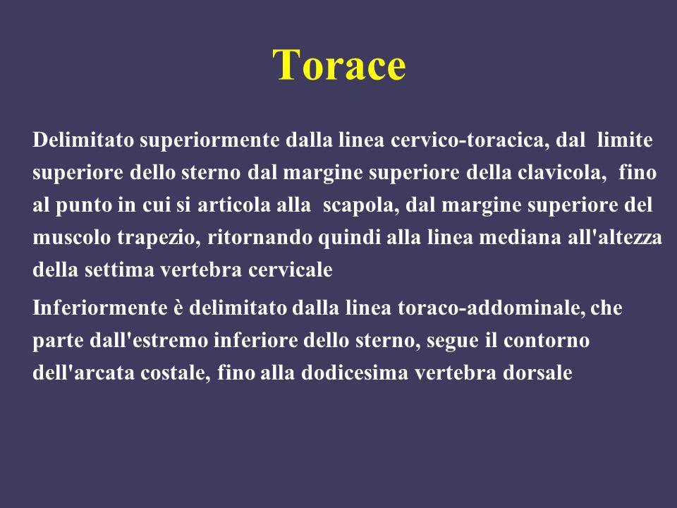 Torace