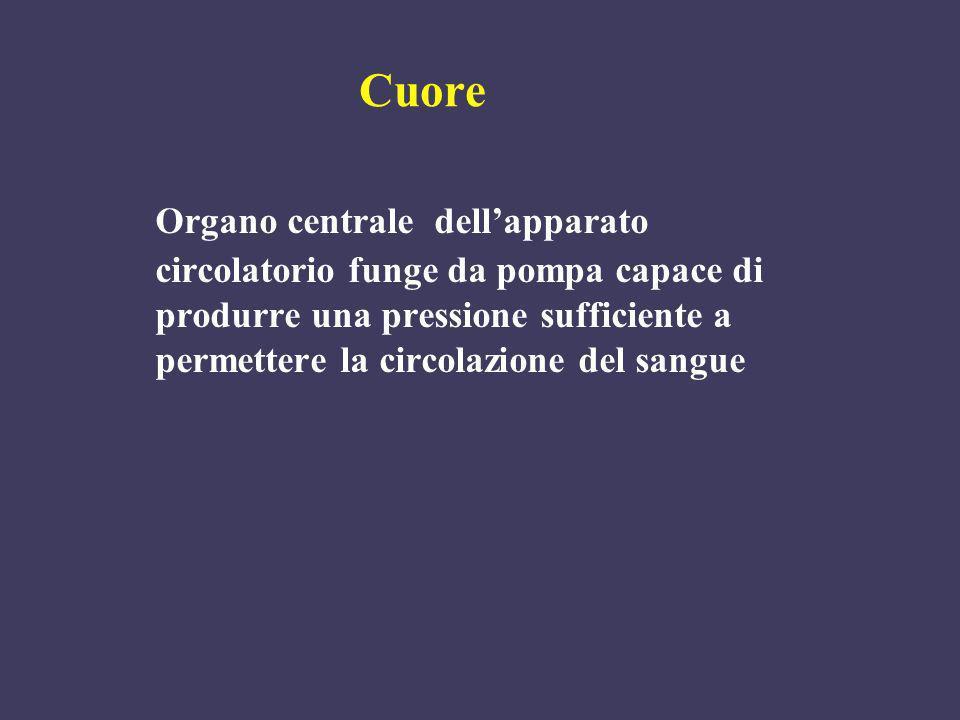Cuore Organo centrale dell'apparato circolatorio funge da pompa capace di produrre una pressione sufficiente a permettere la circolazione del sangue.