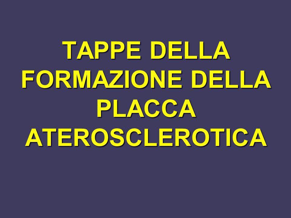 TAPPE DELLA FORMAZIONE DELLA PLACCA ATEROSCLEROTICA