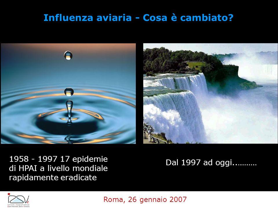 Influenza aviaria - Cosa è cambiato