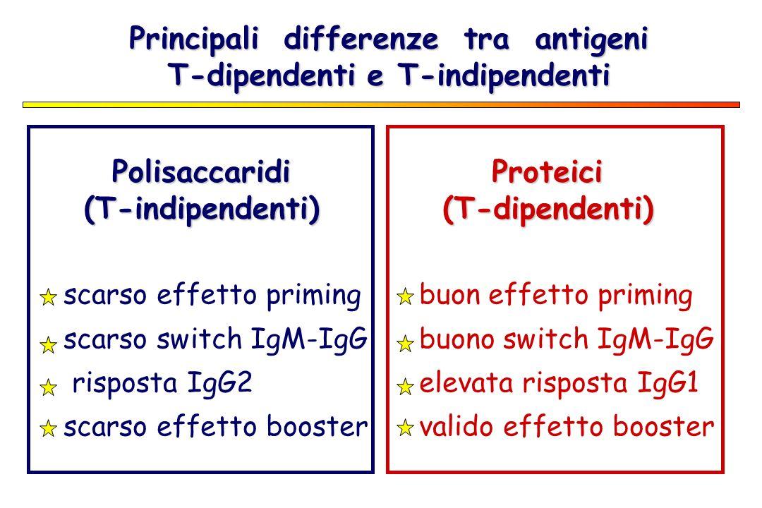 Principali differenze tra antigeni T-dipendenti e T-indipendenti