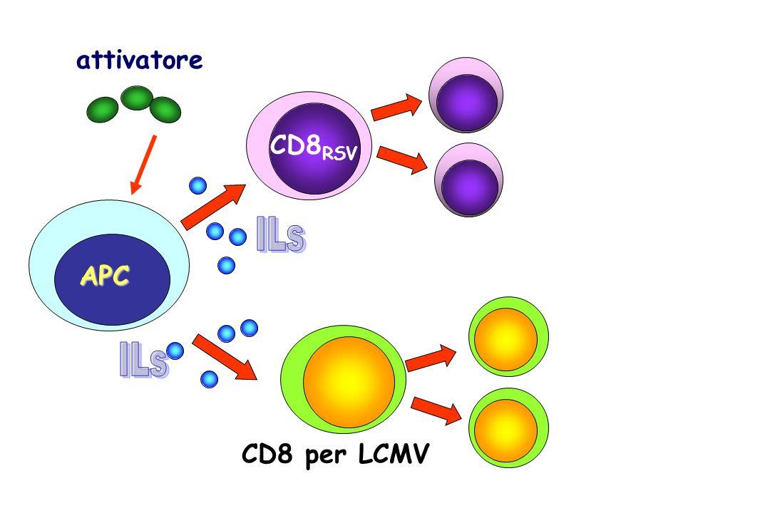 attivatore CD8RSV ILs CD8RSV APC ILs CD8 per LCMV