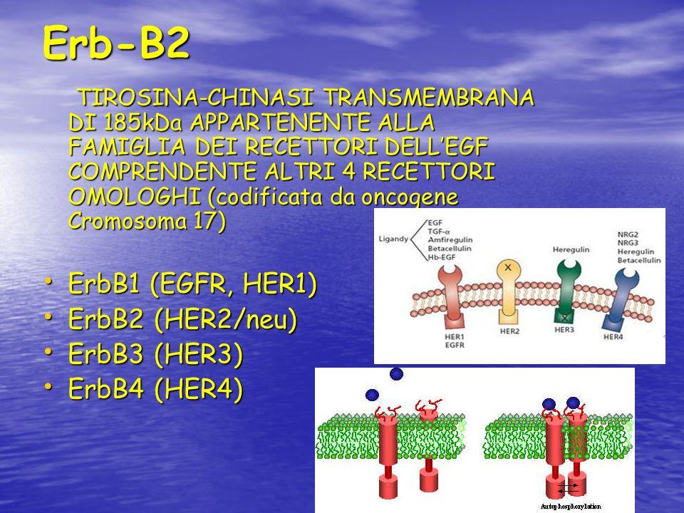 Erb-B2