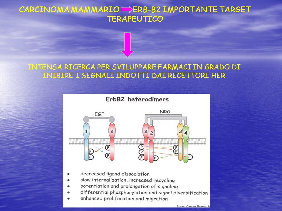 CARCINOMA MAMMARIO ERB-B2 IMPORTANTE TARGET TERAPEUTICO