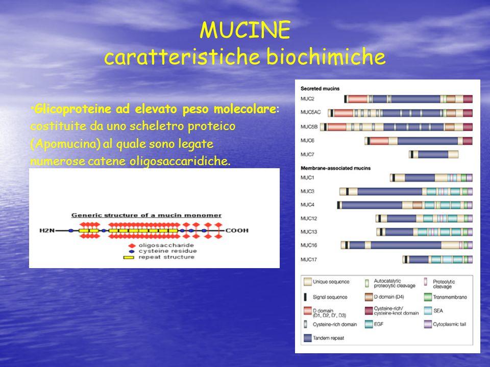 MUCINE caratteristiche biochimiche