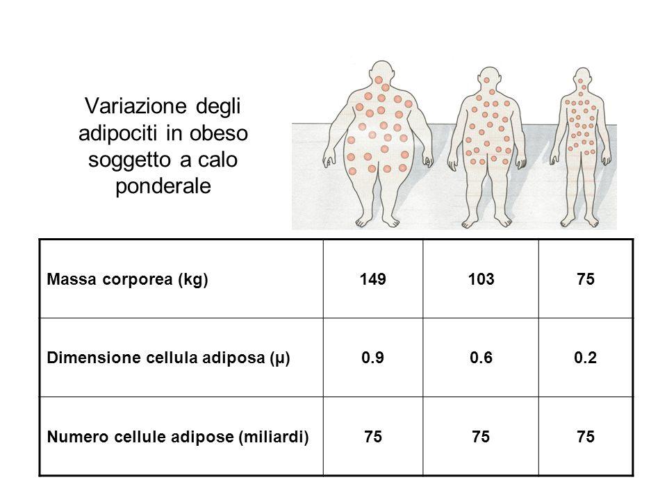 Variazione degli adipociti in obeso soggetto a calo ponderale