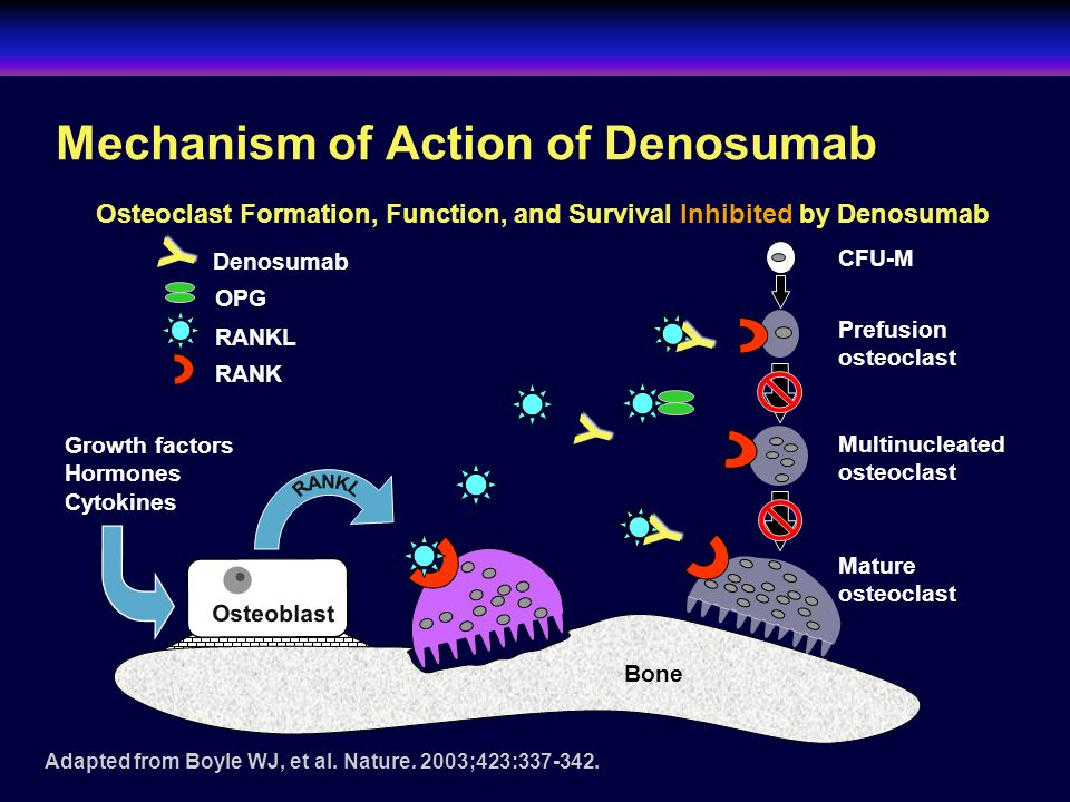 Mechanism of Action of Denosumab